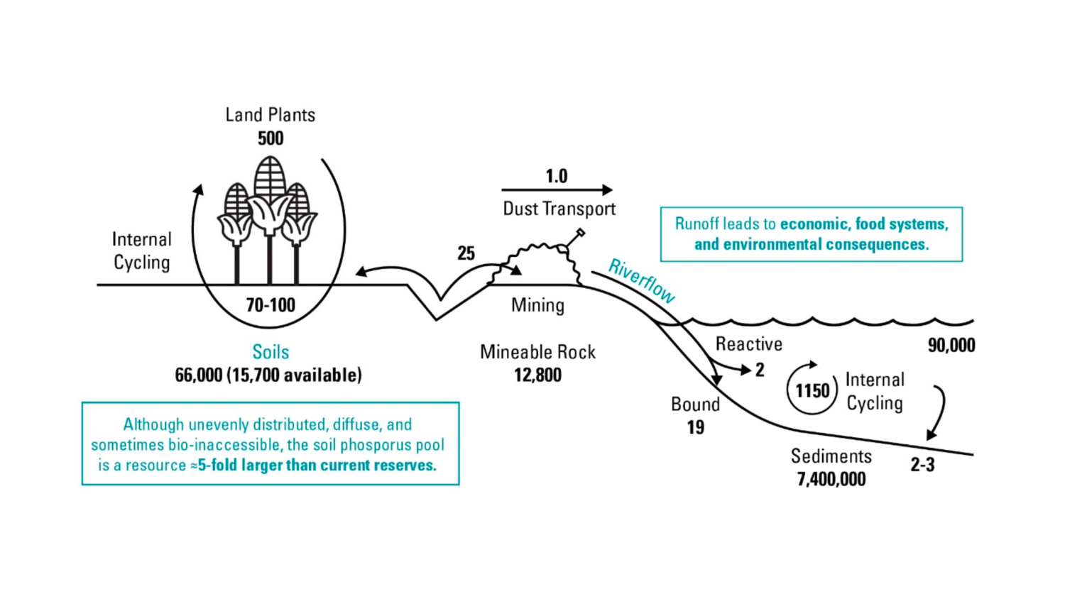 global phosphorus flows diagram