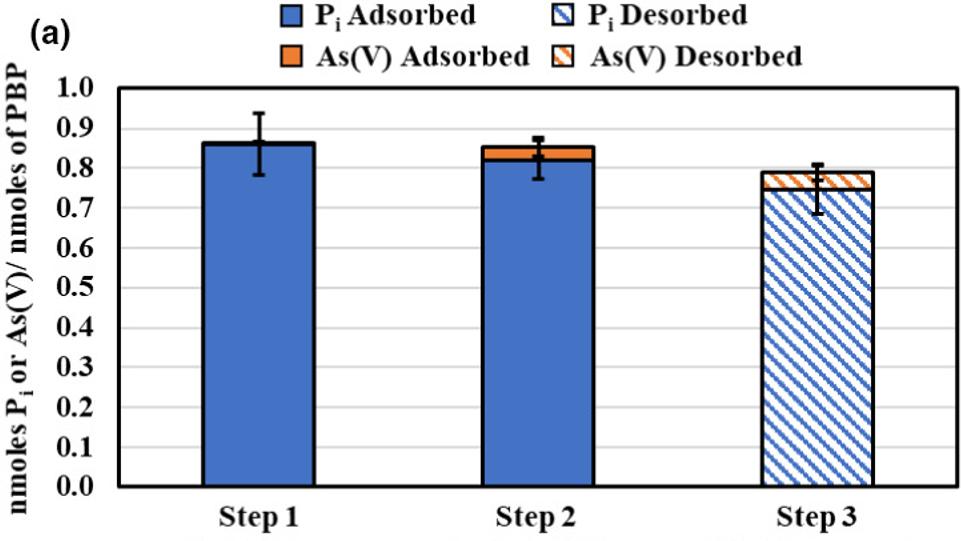 Phosphorus-binding protein selective adsorption of Phosphorus