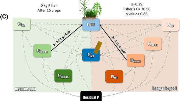 Model of Phosphorus Uptake by Plants